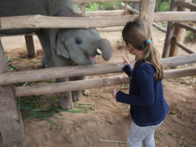 Luang Prabang - bebê elefante