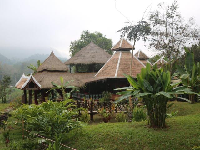 Luang Prabang - elefante campo (1)